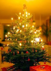 Weihnachtsbaum_Wikimedia_Malene Thyssen
